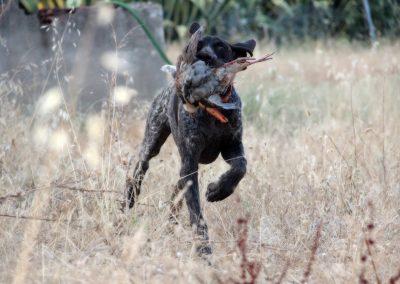 caza9