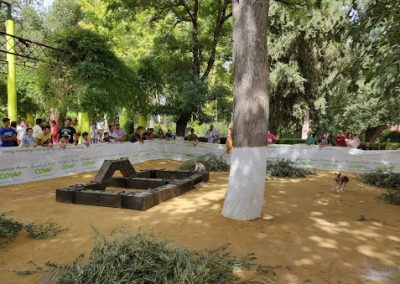 Habilidades de Podenco y Madriguera en Castro del Río 10