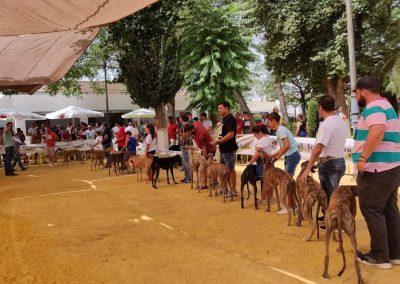 Habilidades de Podenco y Madriguera en Castro del Río 2
