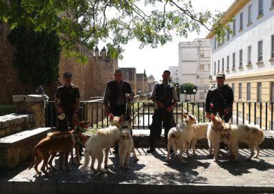 Paseo de Rehalas por Córdoba 2