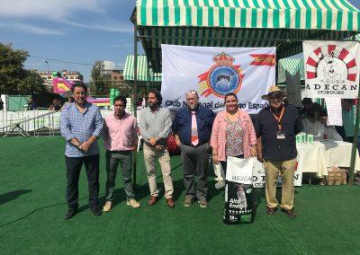 Concurso Galgo Español Campeón de Campeones